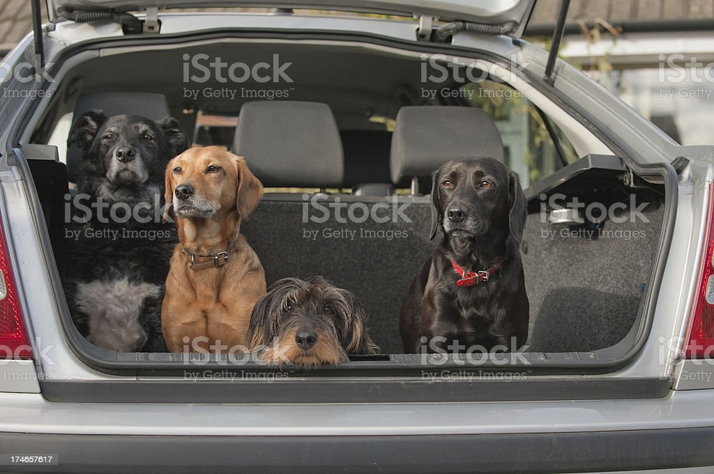 ready for the off royalty-free stock photo