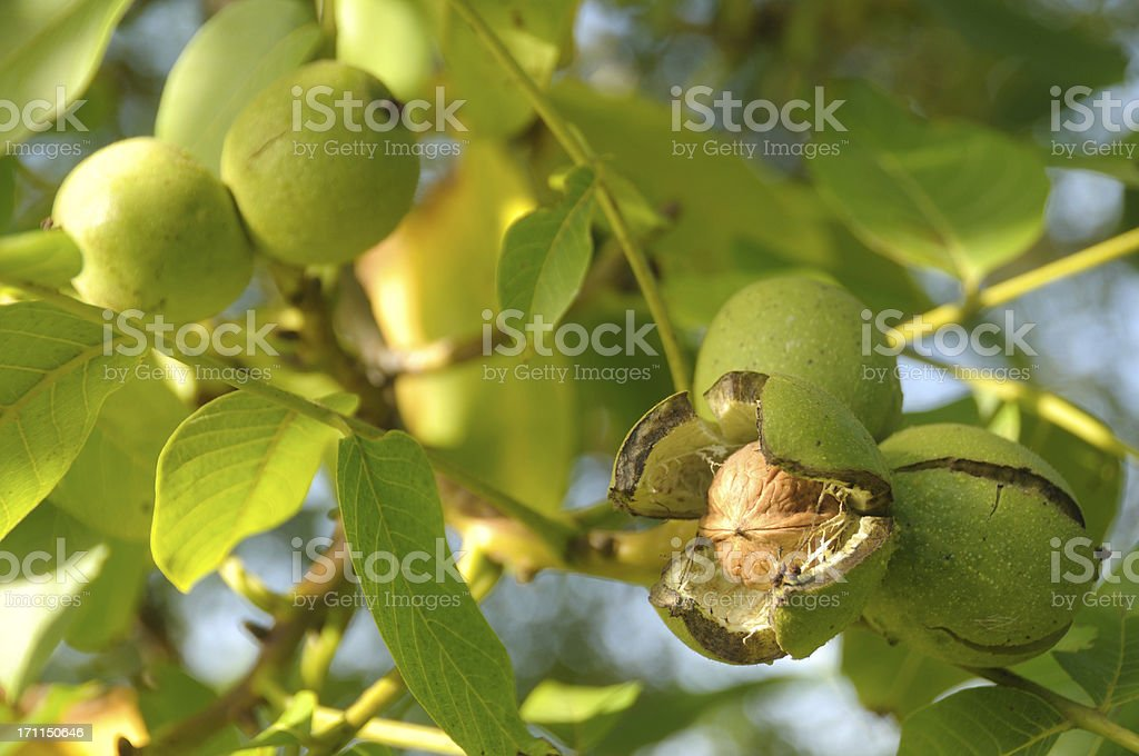 Ready to fall. stock photo