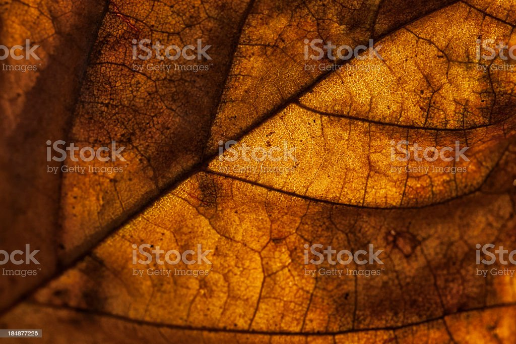 Real abstract leaf texture royalty-free stock photo