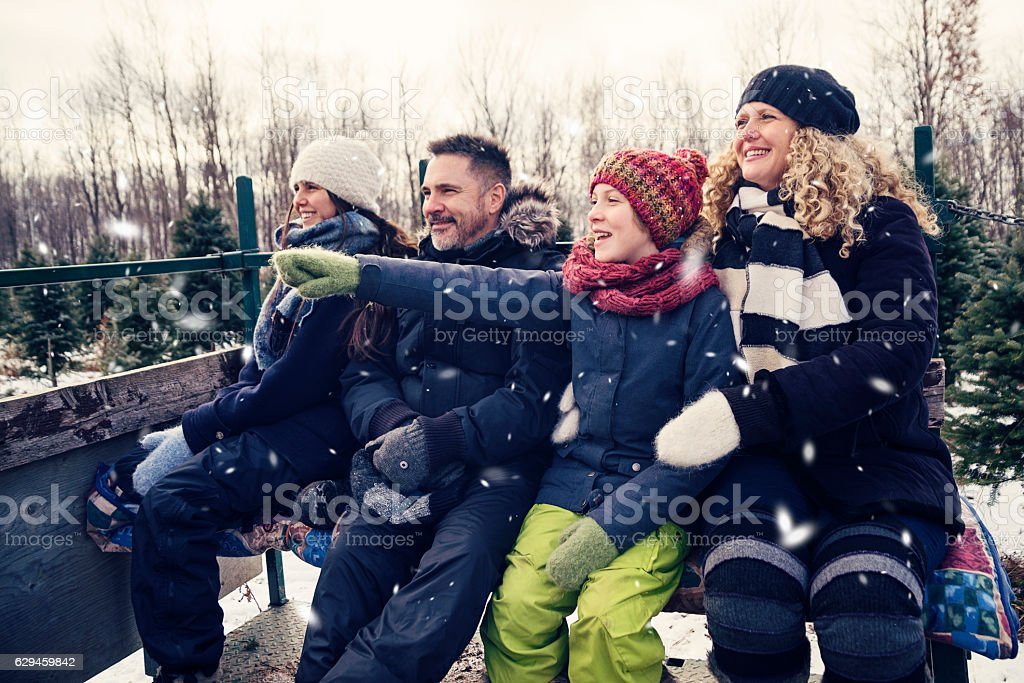 Real family in carriage looking for the perfect Christmas tree. stock photo