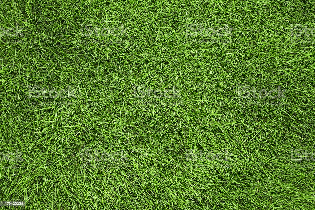 real grass background stock photo
