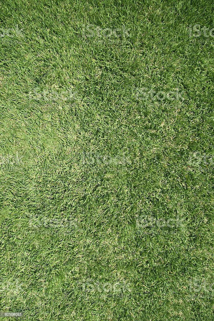 Real grass lawn texture royalty-free stock photo