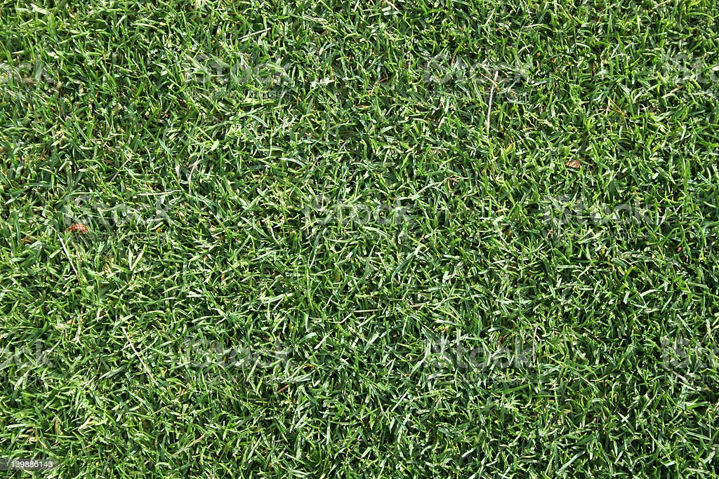 Real grass texture, golf green stock photo