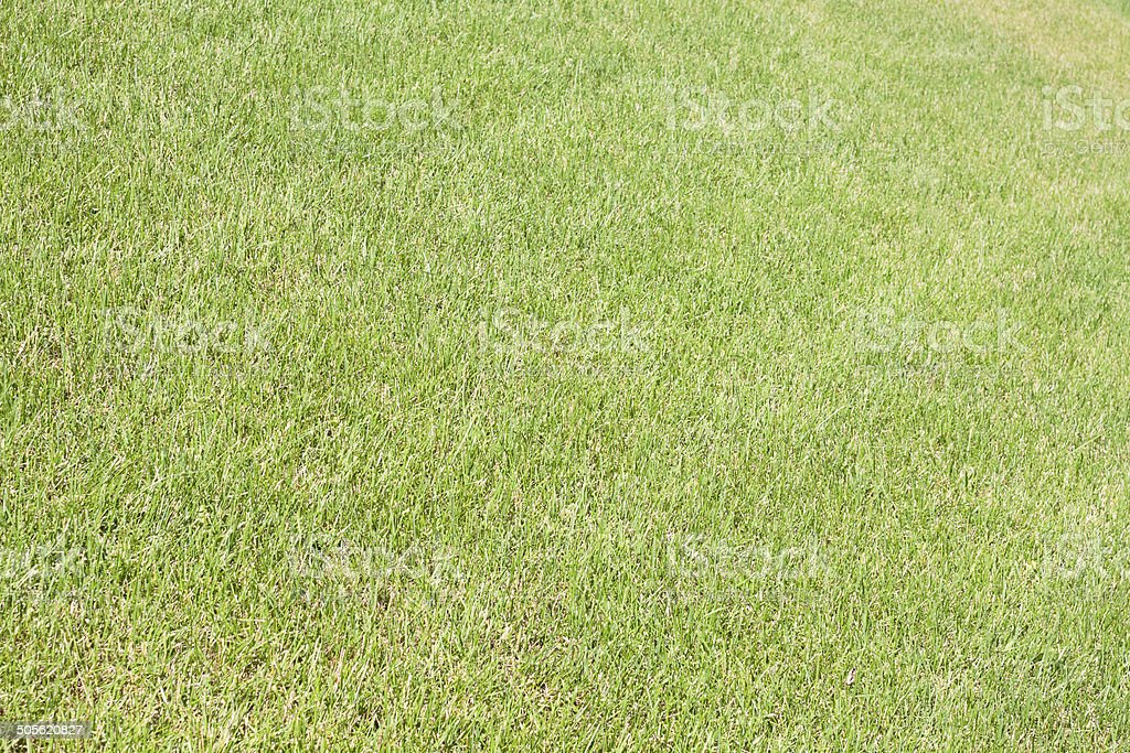 Real green grass stock photo
