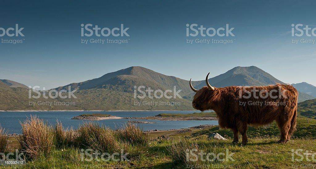 Real Highlander royalty-free stock photo