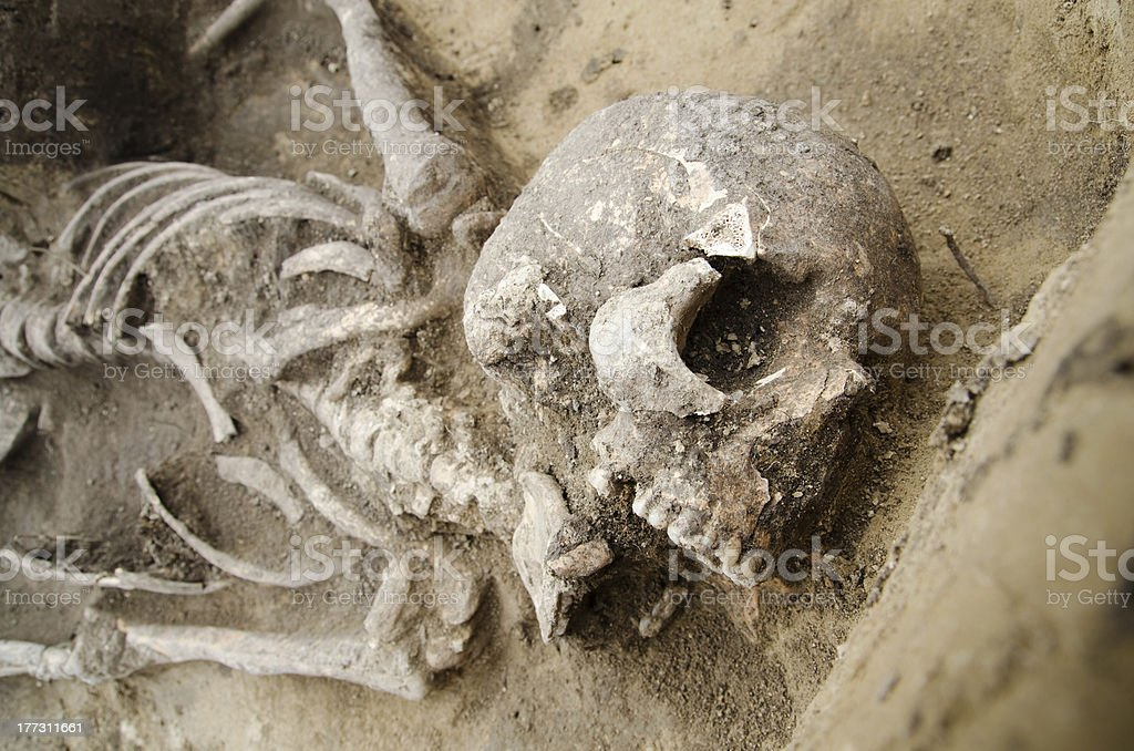 Real human skeleton exhumed royalty-free stock photo