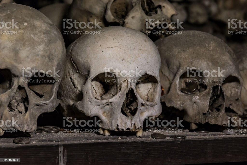 Real human skulls as background stock photo
