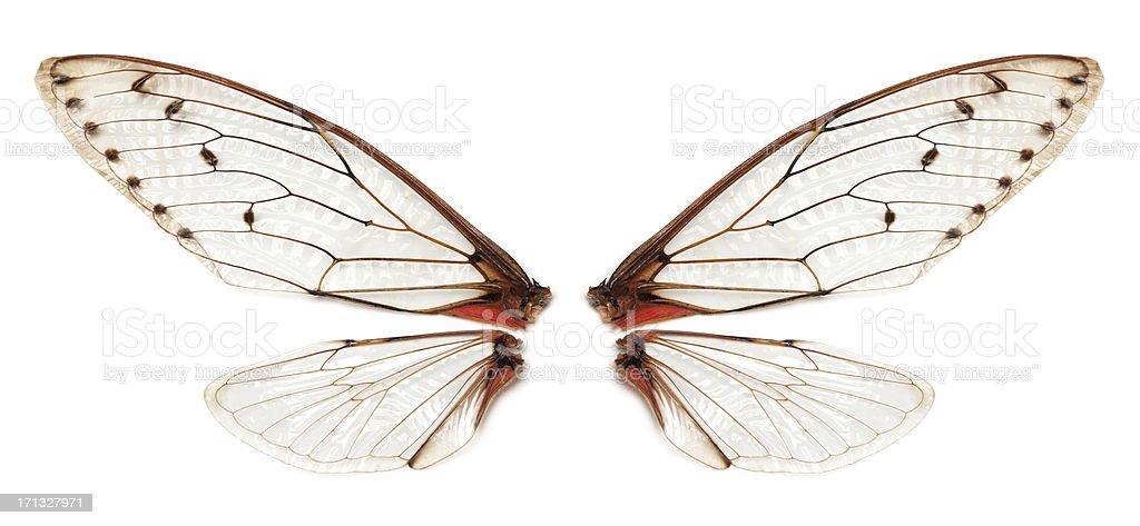 Real Blatt wings – Foto