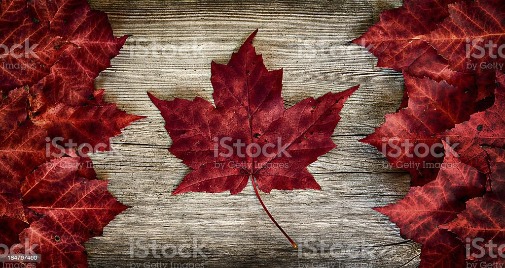 Real Leaf Canada Flag on Weathered Cedar stock photo