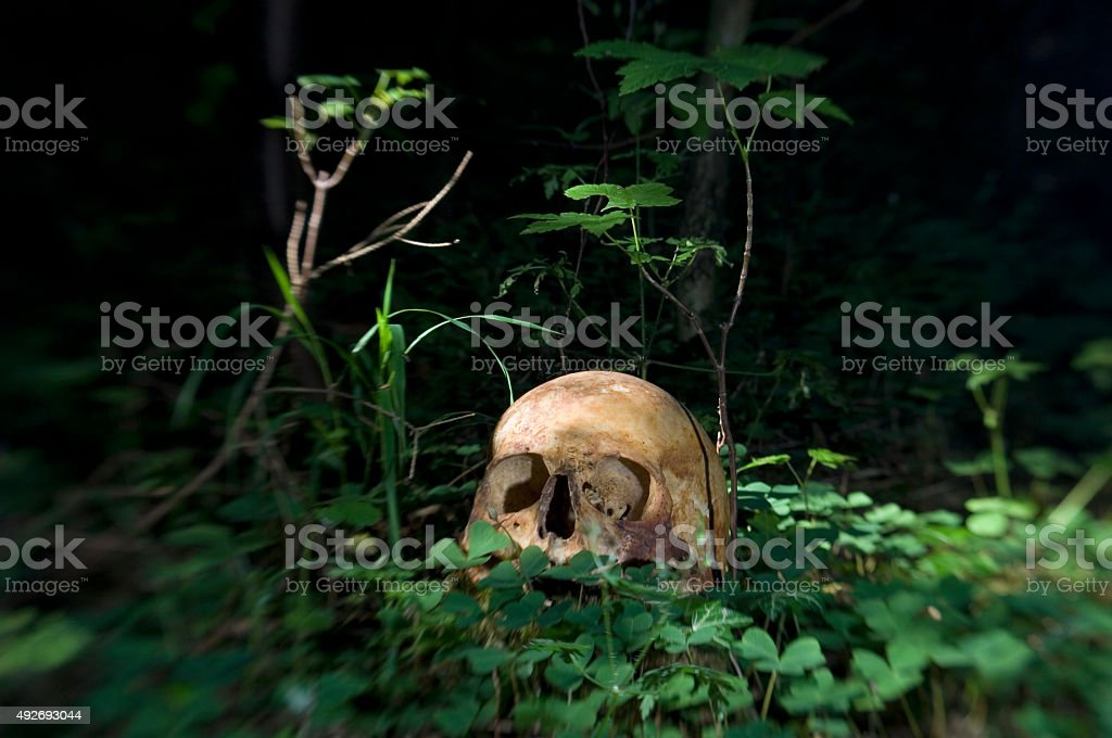 Real Skull in forest stock photo