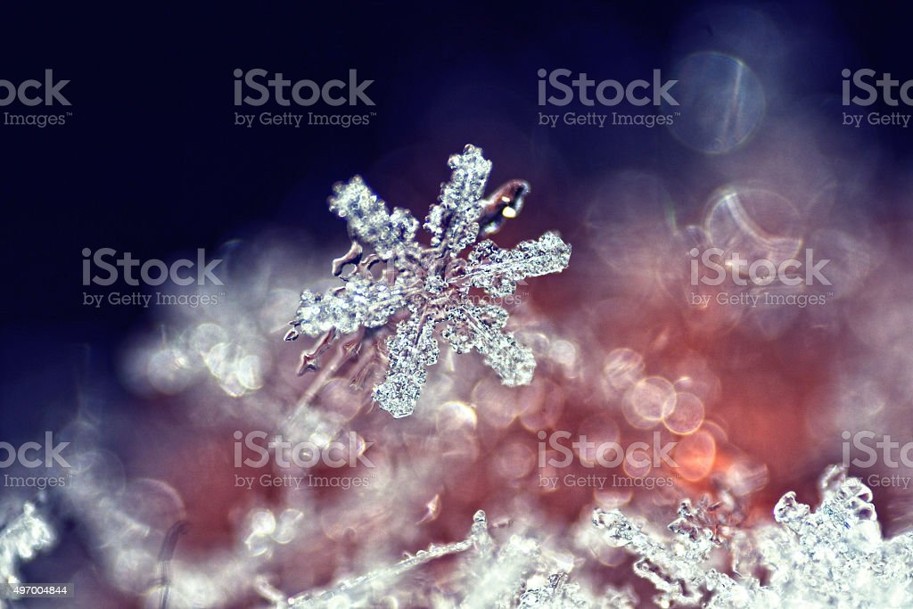 Real snowflake macro stock photo