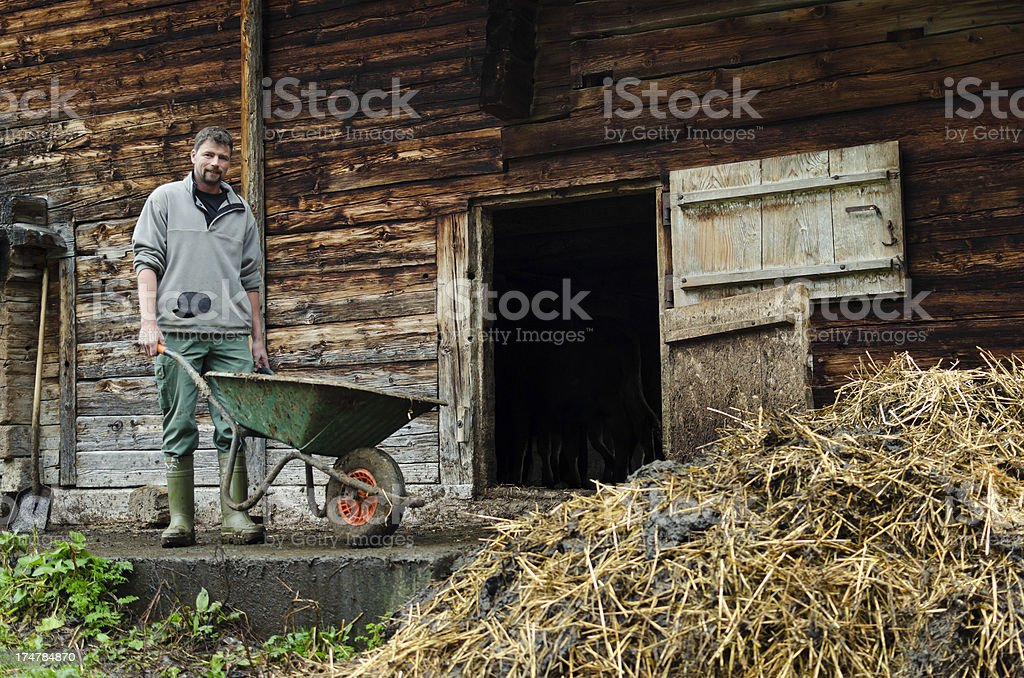 Real Swiss Alpine farmer working royalty-free stock photo