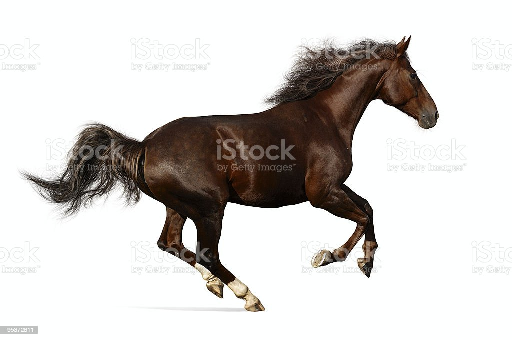 Realistic illustration of budenny horse galloping stock photo