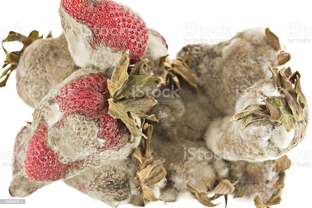 Really Rotten Strawberries royalty-free stock photo