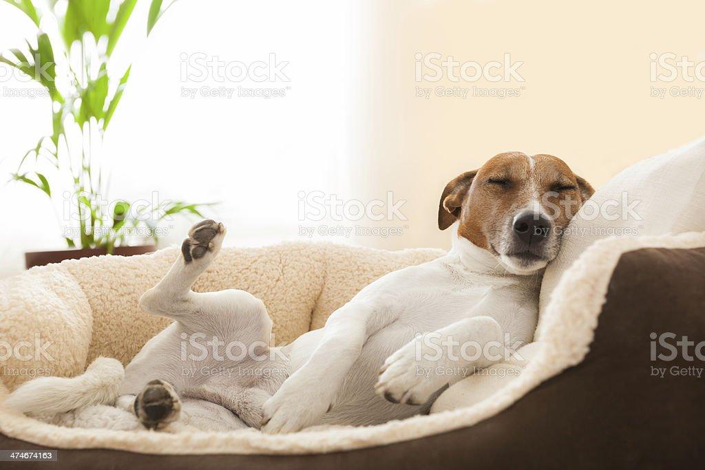 realxing dog stock photo