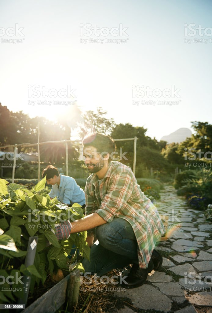 Reaping their rewards crop-by-crop stock photo
