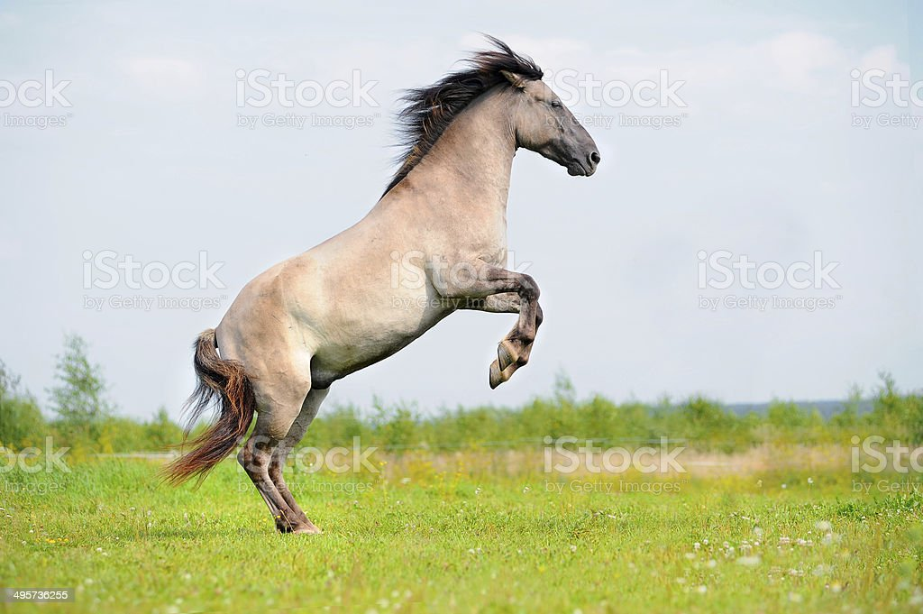 rear free horse in the field stock photo