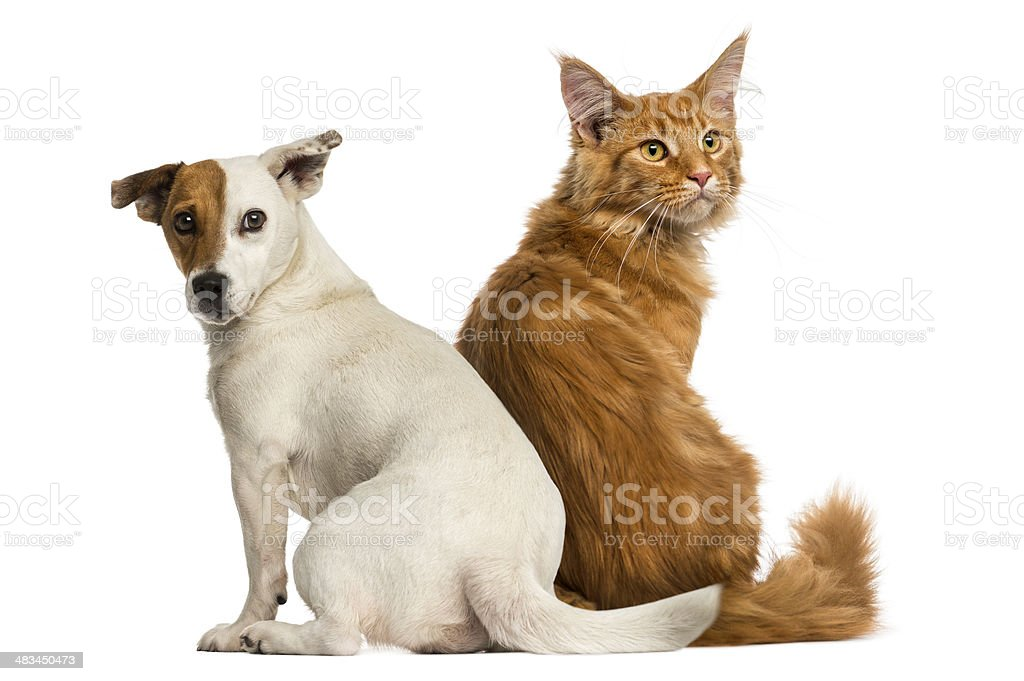 Rear view : cat and dog sitting, looking back stock photo