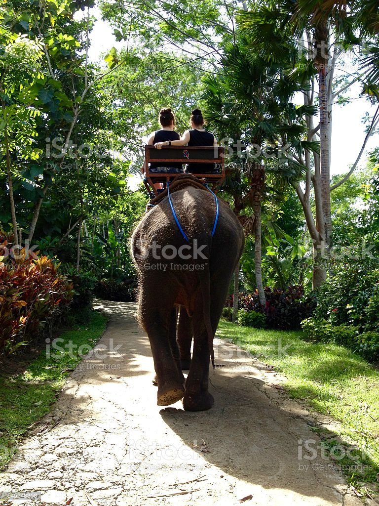 Rear View Elephant trekking in Bali stock photo