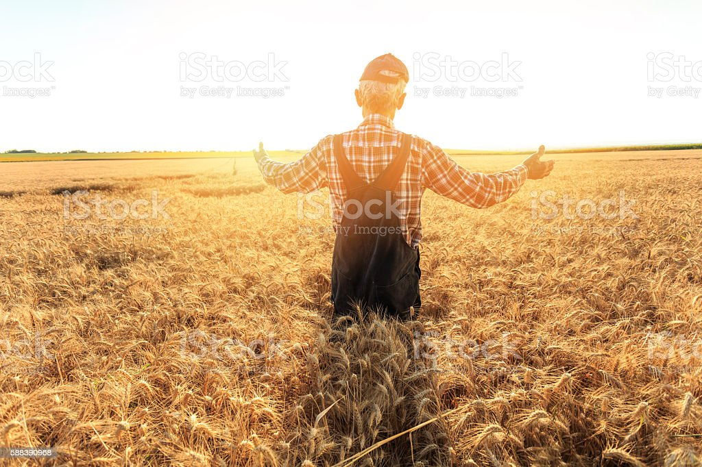 Rear view of farmer standing in the middle of field stock photo