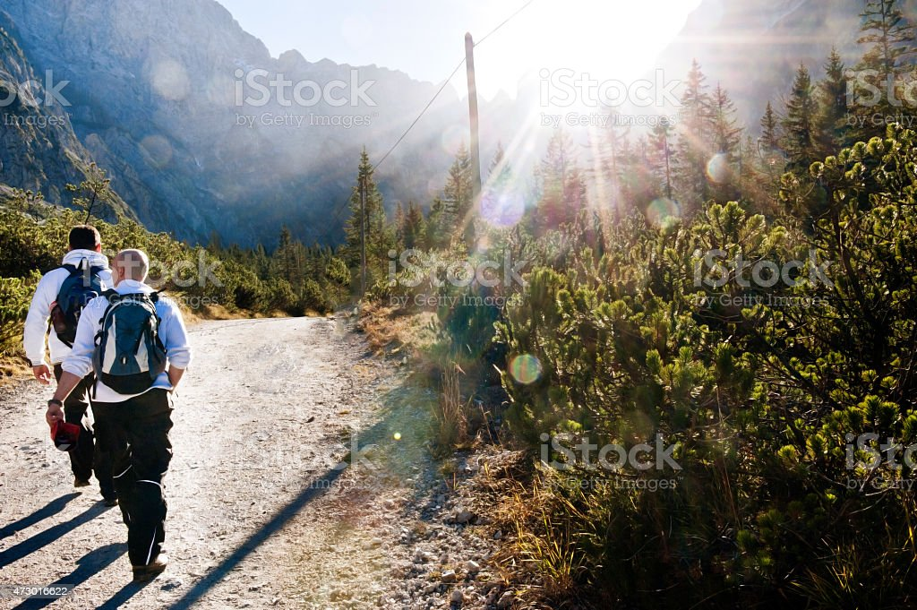 Rear view of hiking friends with backpacks walking in forest stock photo
