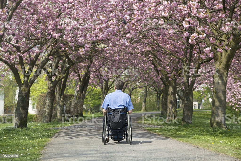 Rear view of man in wheelchair under blooming cherry trees royalty-free stock photo