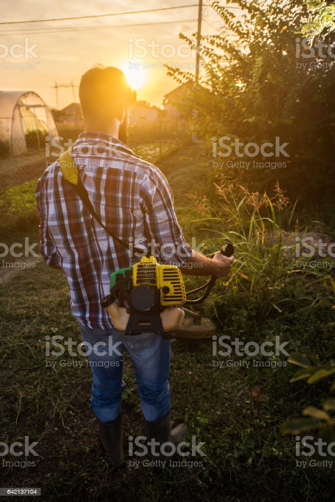 Rear view of manual worker mowing the lawn at sunset. stock photo