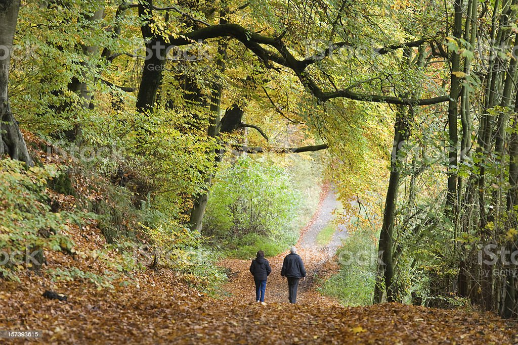 Rear View of Senior couple Walking in autumn forest (XL) royalty-free stock photo