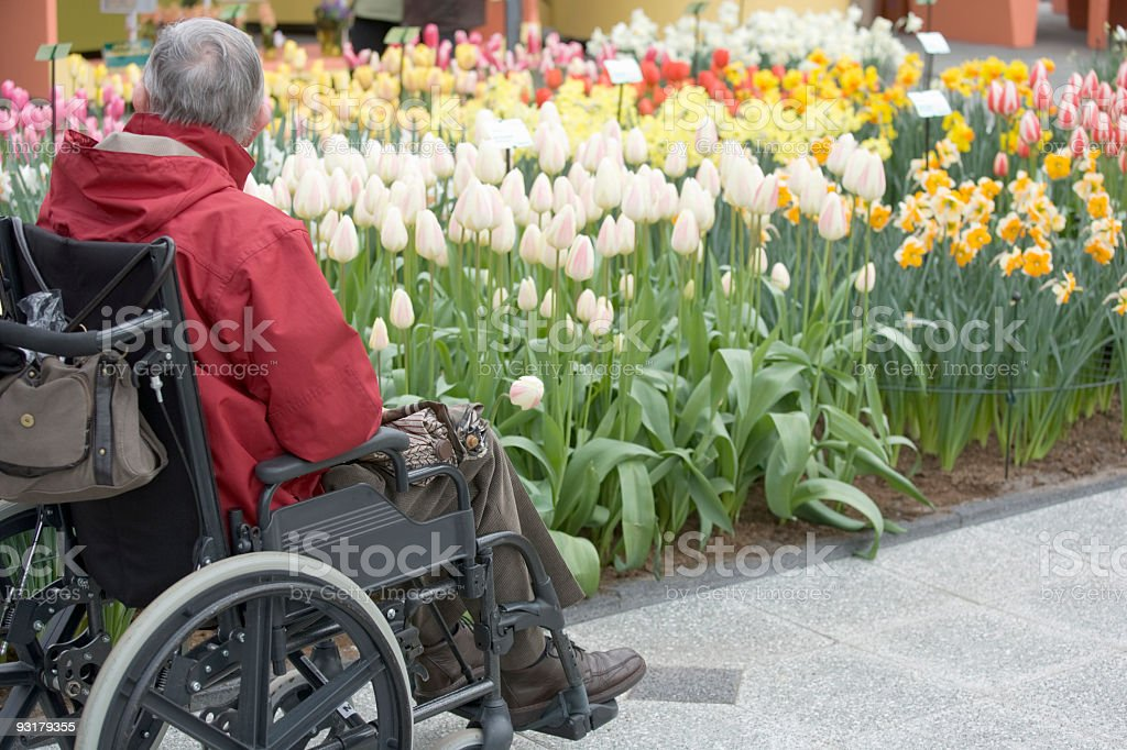 Rear view of senior man in wheelchair looking at flowers royalty-free stock photo