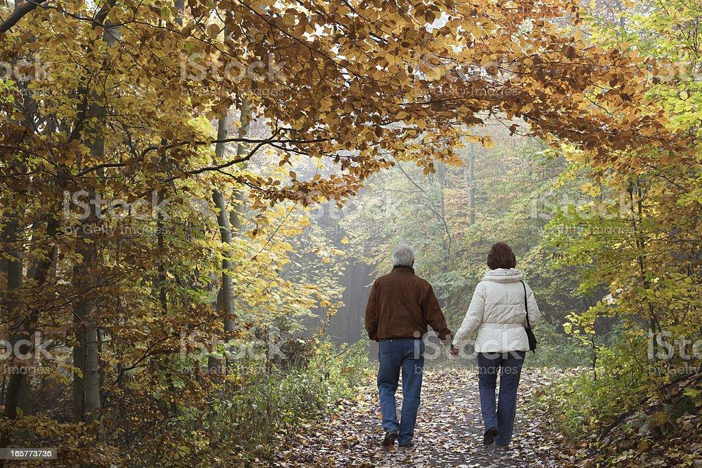 Rear view on senior couple walking in autumn forest (XXXL) stock photo