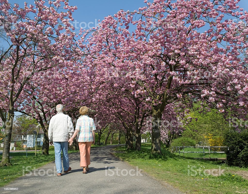 Rear view on senior couple walking under blooming cherry trees royalty-free stock photo