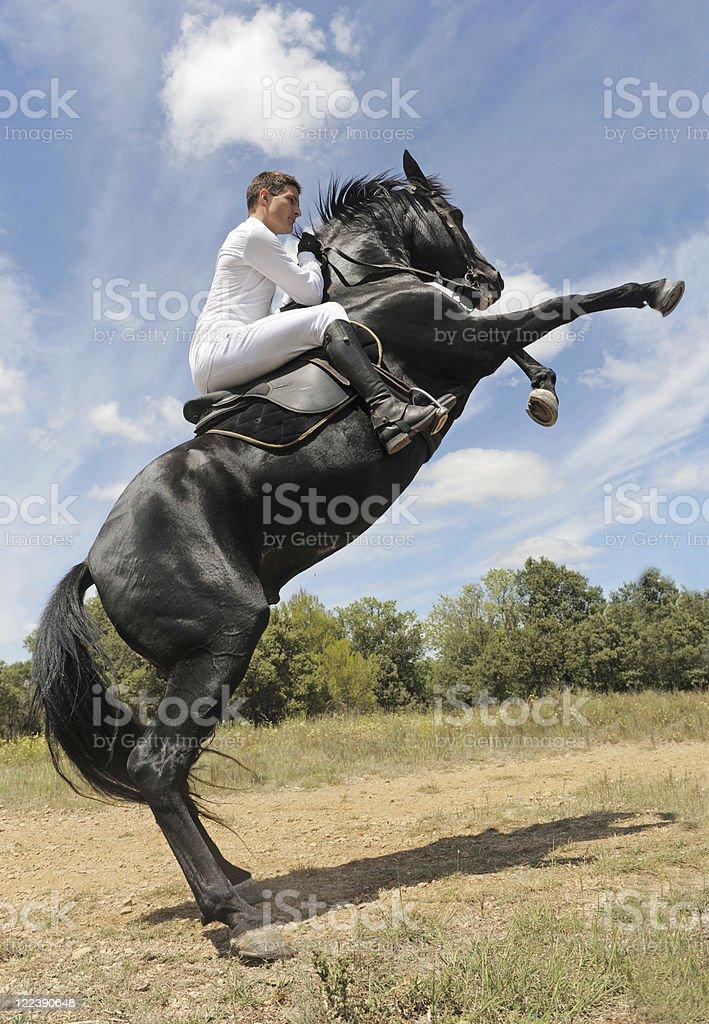rearing horse stock photo