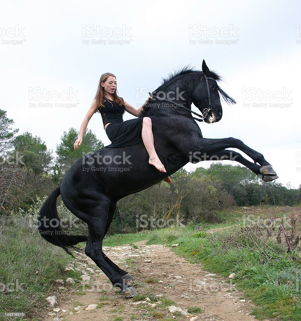 rearing stallion stock photo