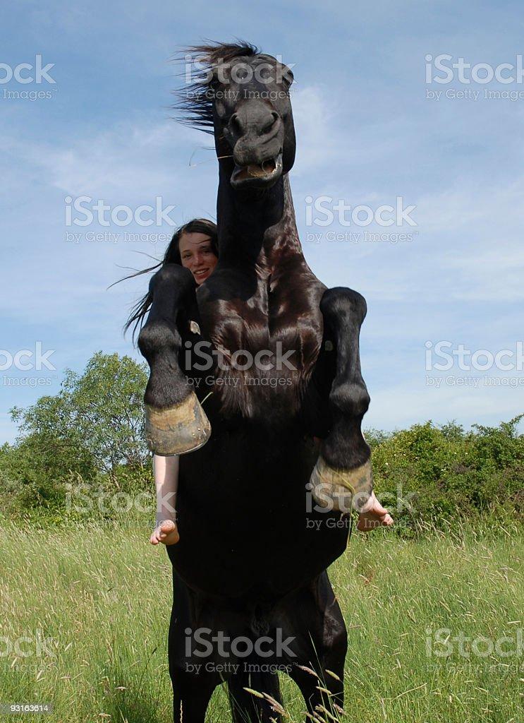 rearing stallion royalty-free stock photo
