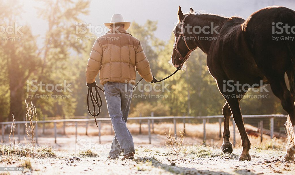 Rearview of man guiding horse with lead rope through field stock photo