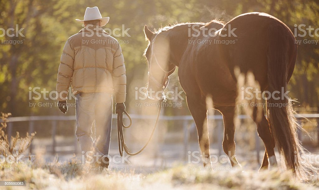 Rearview of man walking horse with lead rope through field royalty-free stock photo