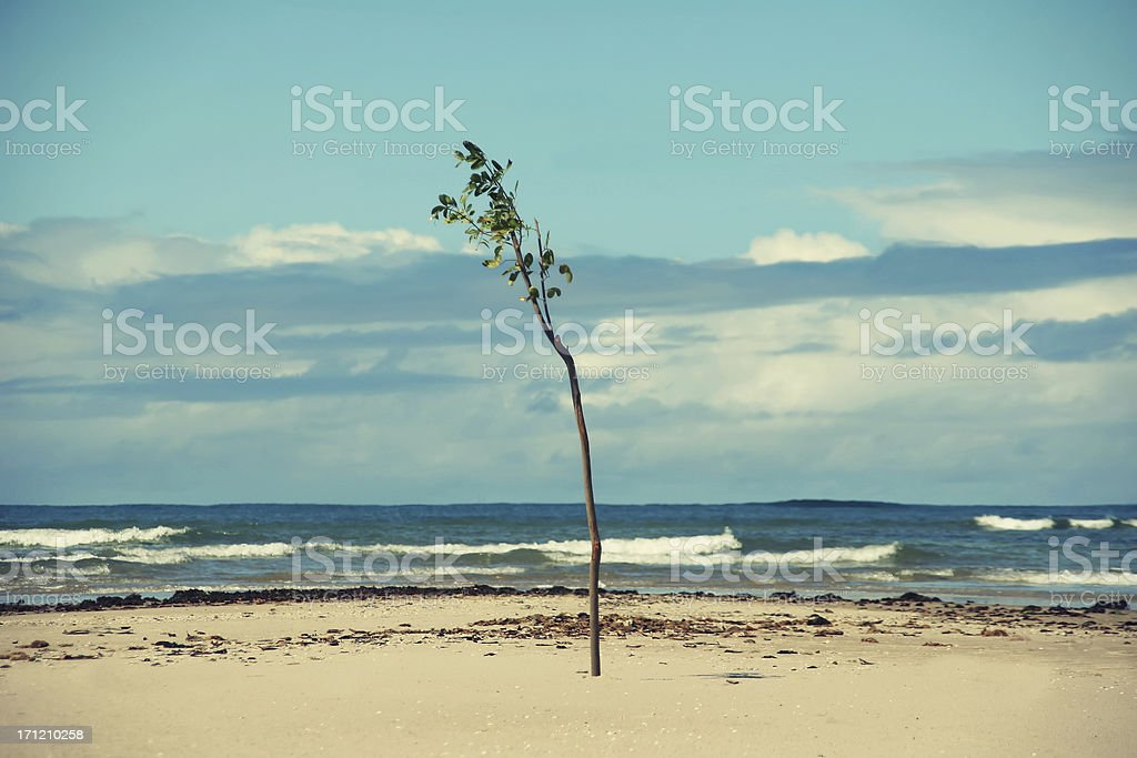 Rebirth of new life in an hostile environment stock photo