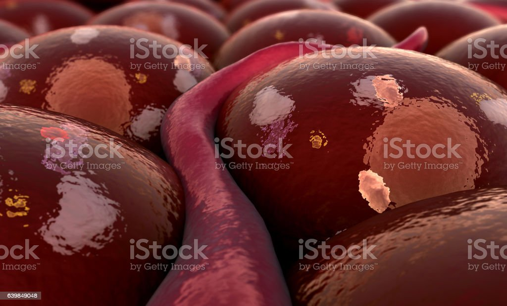 receptors and vein stock photo