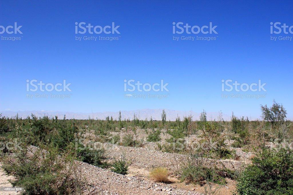 Reclaim wasteland stock photo