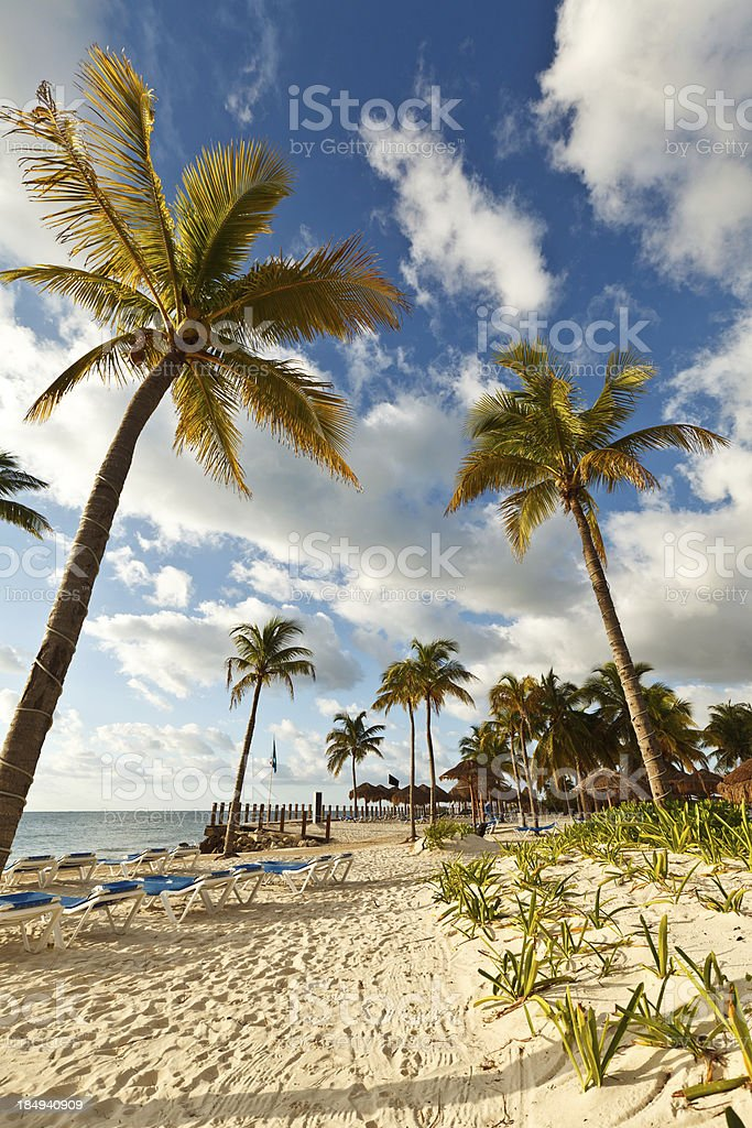 Reclining Beach Chairs, Palm Trees and Palapas, Mexico stock photo