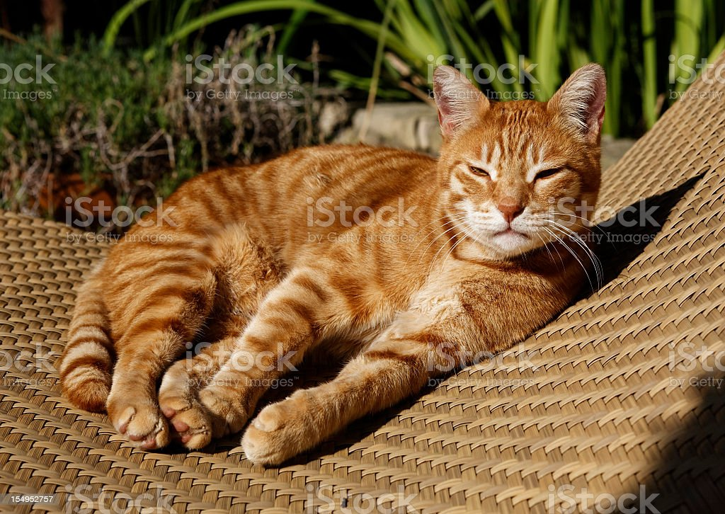 Reclining Cat royalty-free stock photo