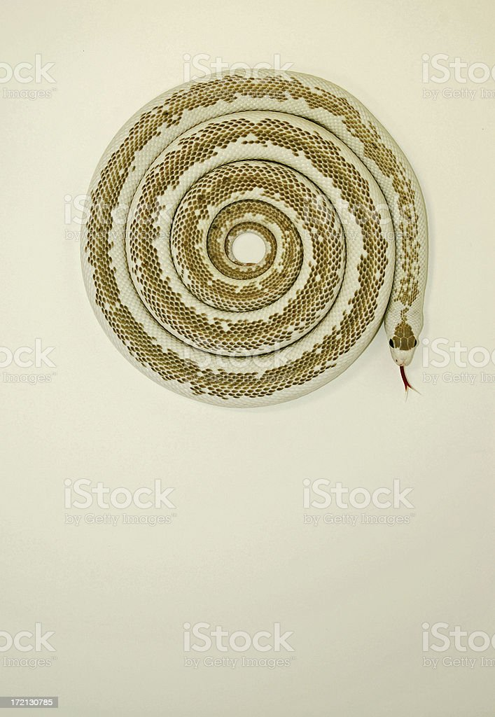 Recoil royalty-free stock photo