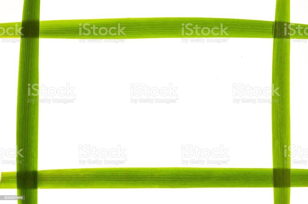 Rectangular frame made of long green leaves. stock photo