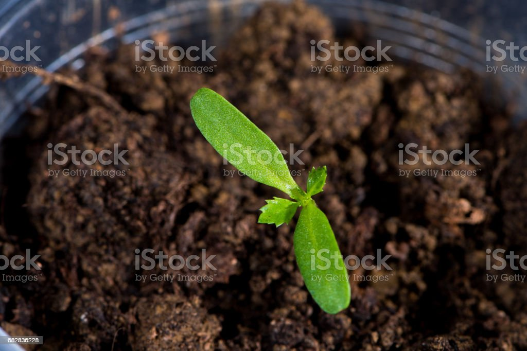 Recycled plastic bottle with Thyme plants stock photo