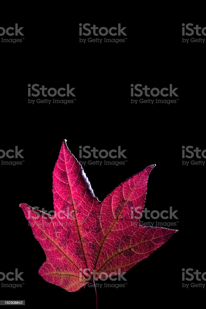 Recycling Autumn Leaves royalty-free stock photo