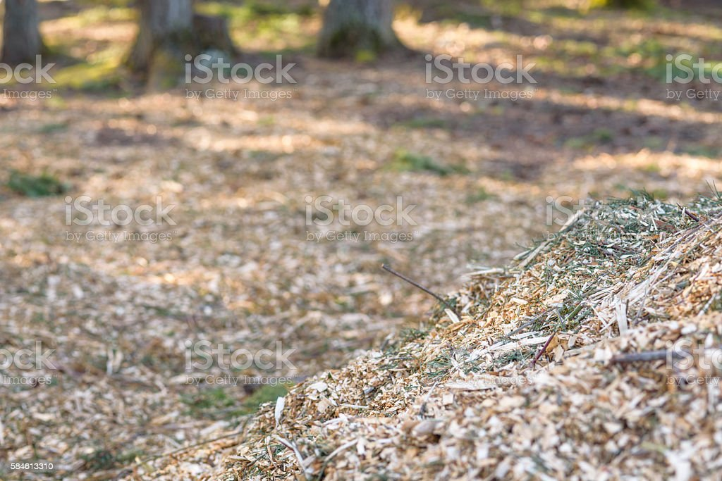 Recycling removed trees stock photo