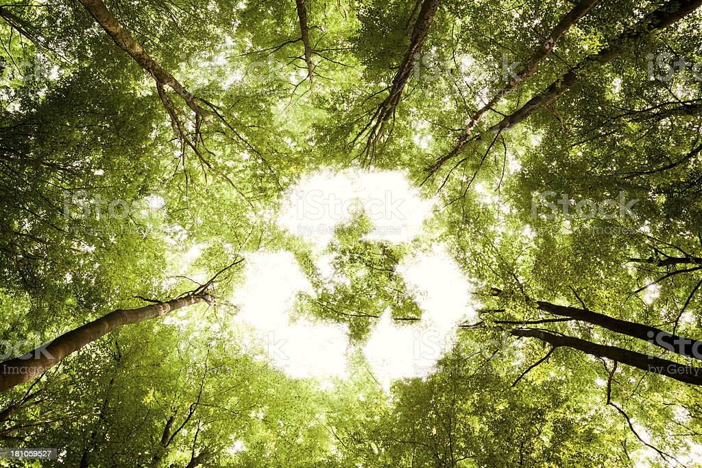 Recycling symbol - Sunlight Forest Nature Environment Tree Green royalty-free stock photo