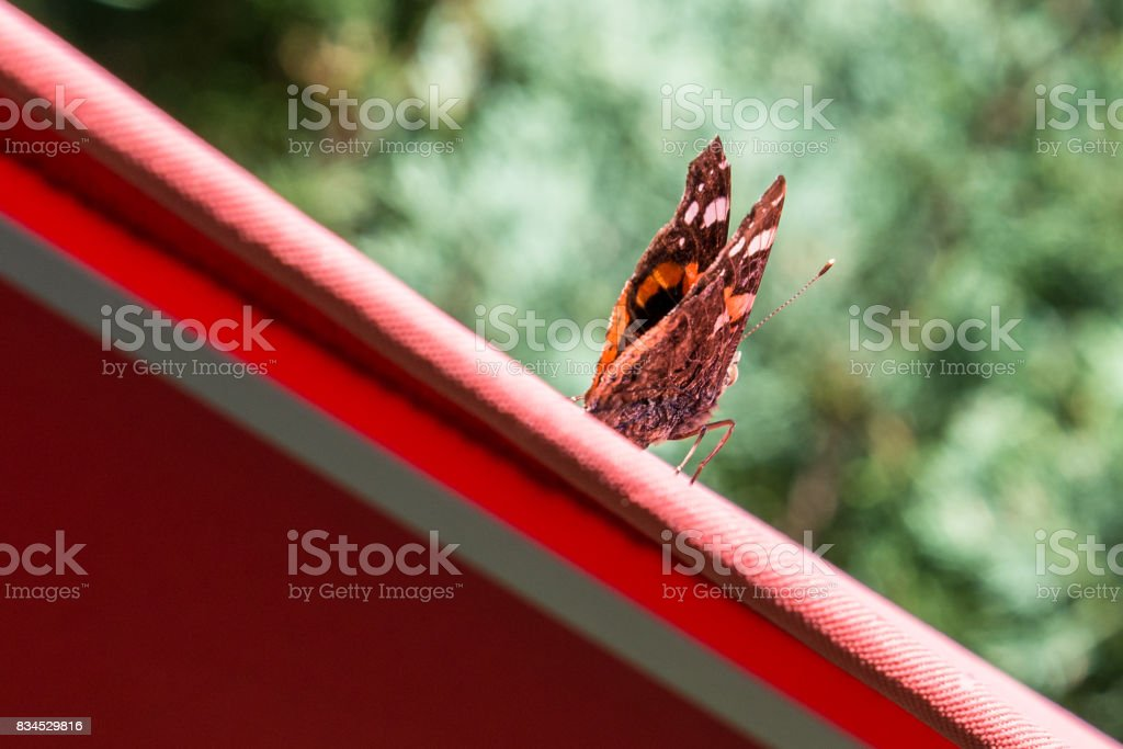 Red admiral butterfly on a red parasol stock photo