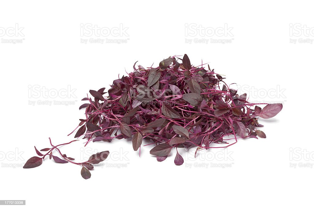 Red Amaranth sprouts stock photo