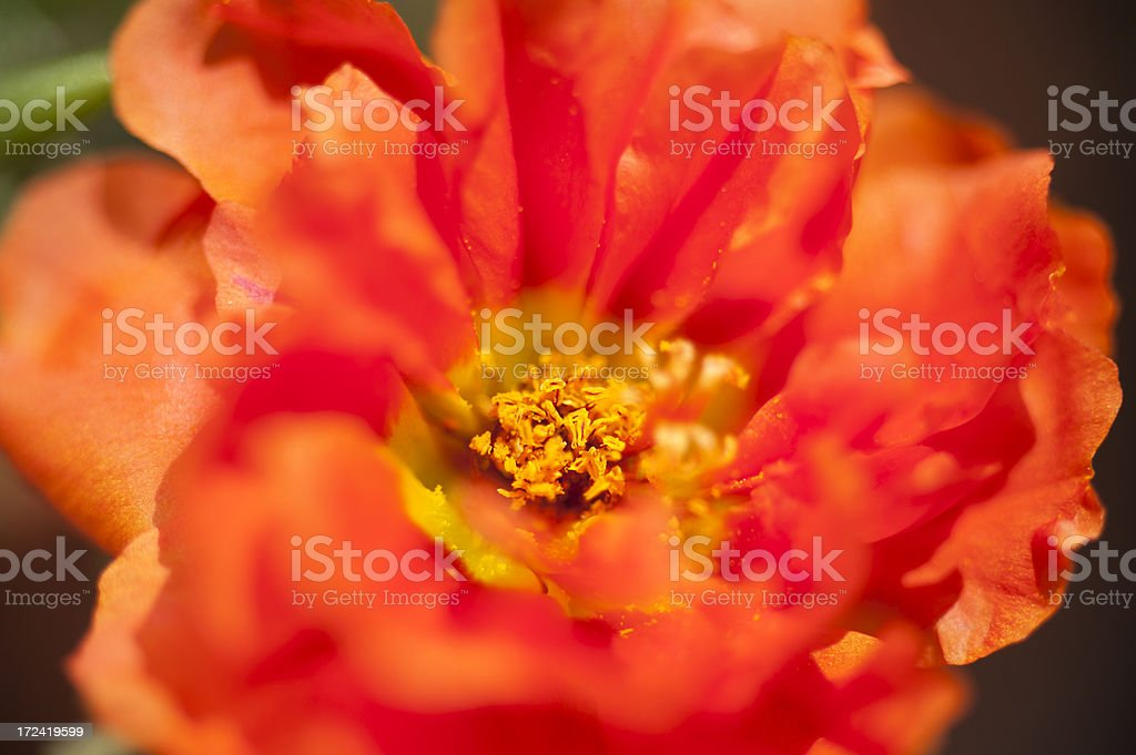 Red and Alive royalty-free stock photo